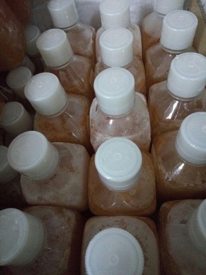 特级胎牛血清( Foetal Bovine Serum)