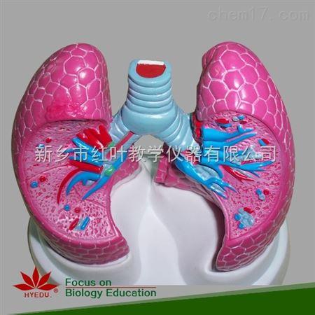 肺病理模型_配件耗材_其它仪器配件耗材_其它