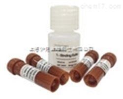 Ⅲ型前胶原氨基端原肽(PIIINP)单克隆抗体