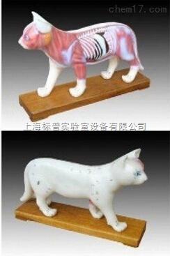 猫体针灸模型 中医专科训练模型