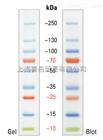 Fermentas 蛋白预染Marker10-250KD 26619/SM1811