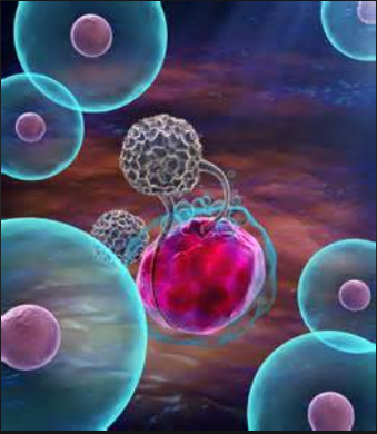 中性粒细胞手绘图红蓝笔