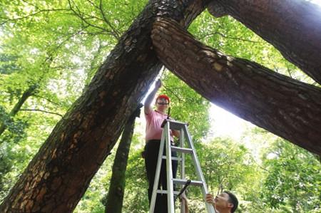 木材横截面缺陷的断层