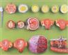GD/A42002高级受精与早期胚胎发育过程模型