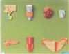 GD/A19002人体内分泌器官模型