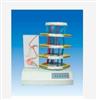 GD/A18225脊髓反射与损伤表现电动模型