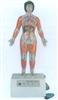 GD/A16005/2微电脑人体心动周期与大、小循环演示仪