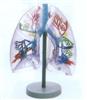GD/A13009透明肺段模型
